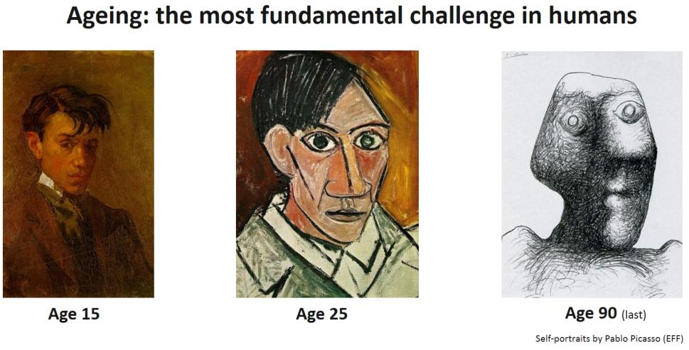 Picasso portraits-white